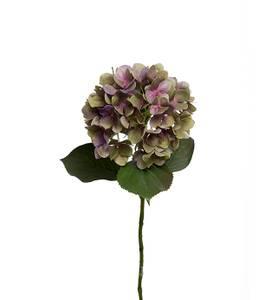 Bilde av Hortensia gren H:65 cm Ø:20