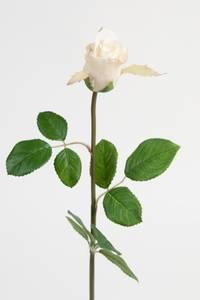 Bilde av Rose 50 cm