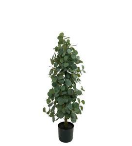 Bilde av Eucalyptus i potte100 cm